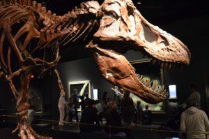 tyrannosaur-like-carnivore-drumheller_2016-08-28